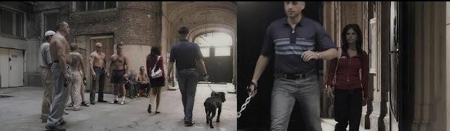 Pitbull Despero Dżemma wpadka